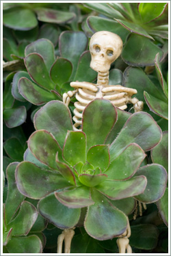 Skeleton-in-the-bush