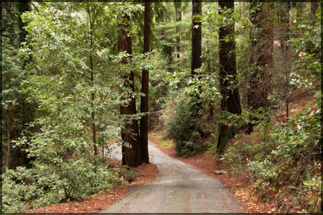 Redwood_road