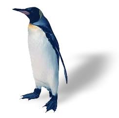 Penguin_standing_2